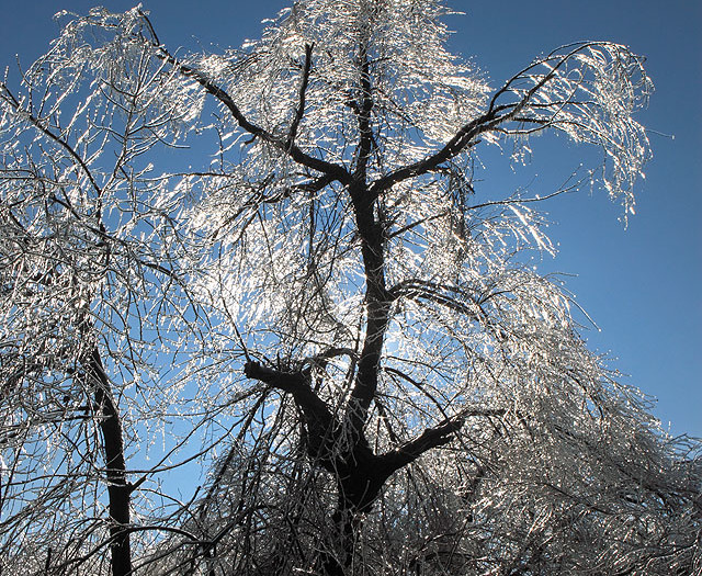 Ice Tree Coming after You