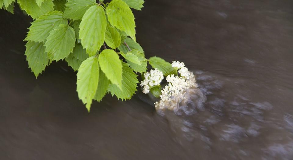 Floral Flow
