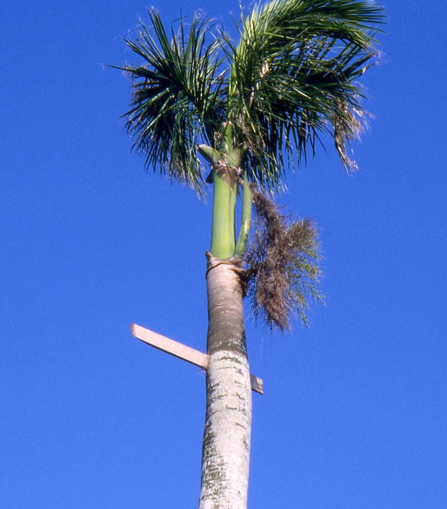 Impaled Palm