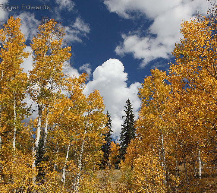 Towering Cumulus and High Country Foliage