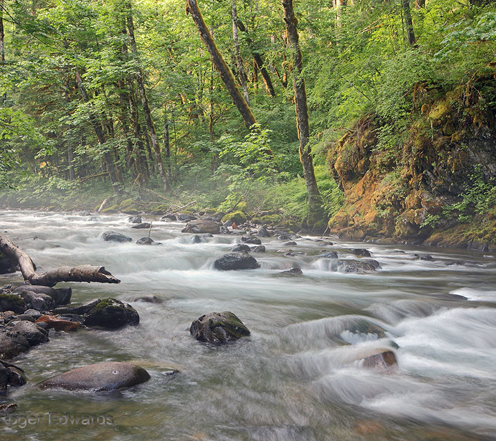 River in the Moist Northwestern Forest
