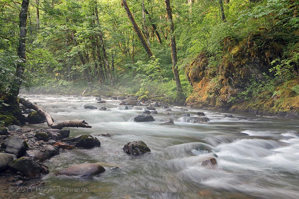 Northwestern Rainforest River