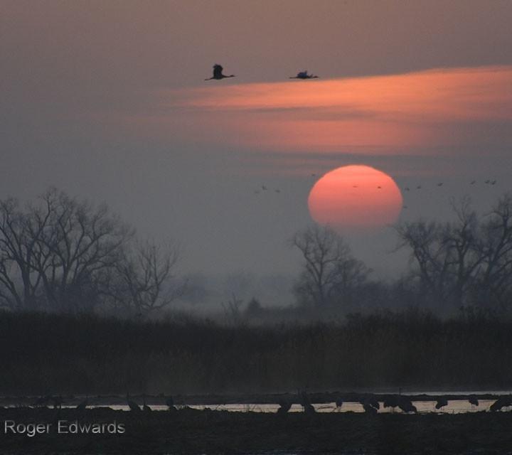 Sandhill Crane Sunrise 1