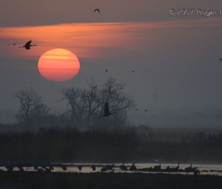 Sandhill Crane Sunrise 2