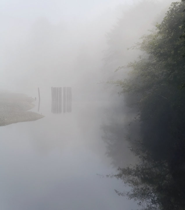 Foggy Backwater
