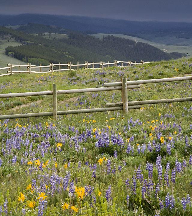 Altostratus Slate Sky over Bighorns Wildflowers