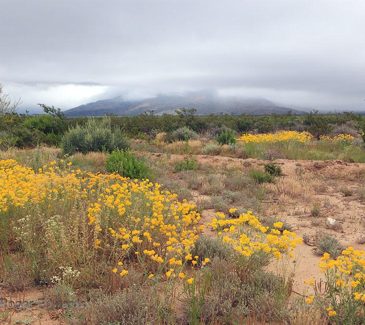 Stratus in the Trans-Pecos