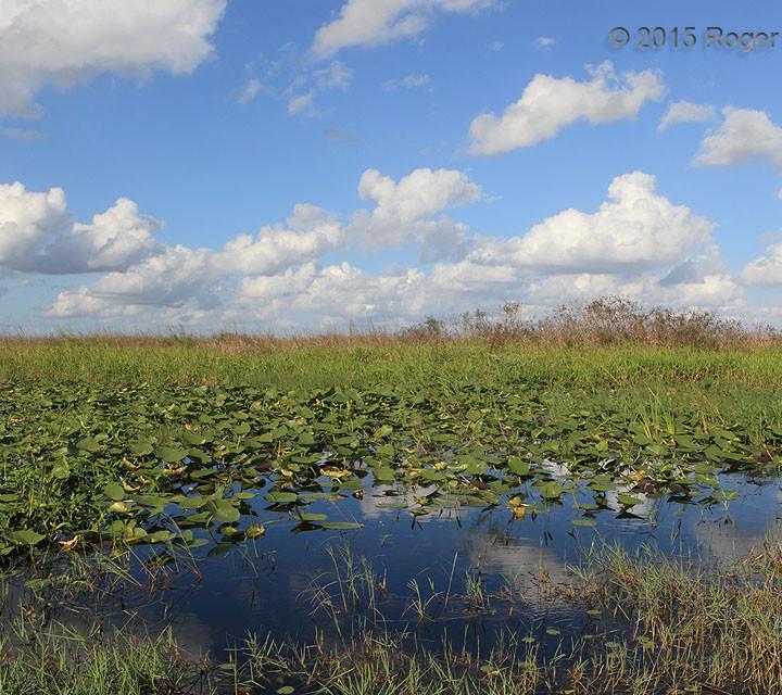 Cumulus Mediocris, Everglades
