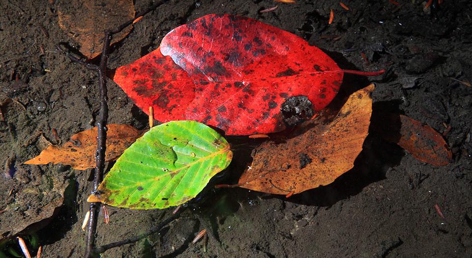 Swimming Autumn Leaves