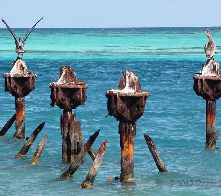 Rusty Pelicans
