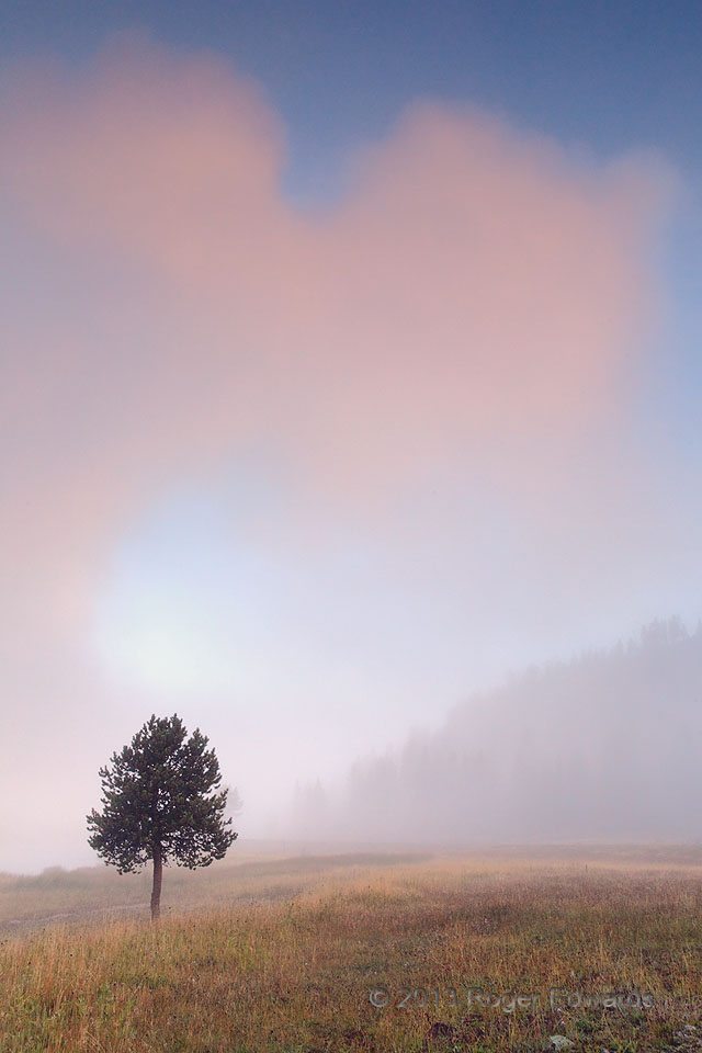 Yellowstone Morning Fogs