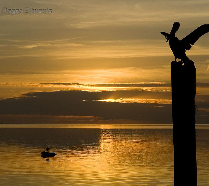 Pelican Landing for Florida Sunset