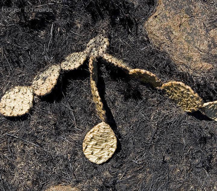 Cactus Carcass