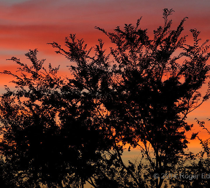 Arboreal Sunset