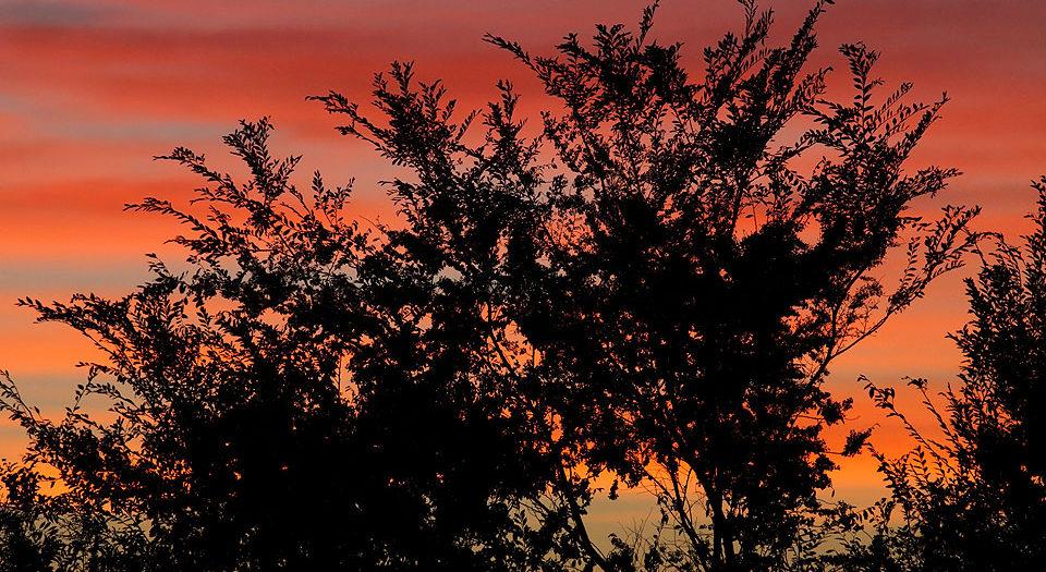 Arboreal Sunset