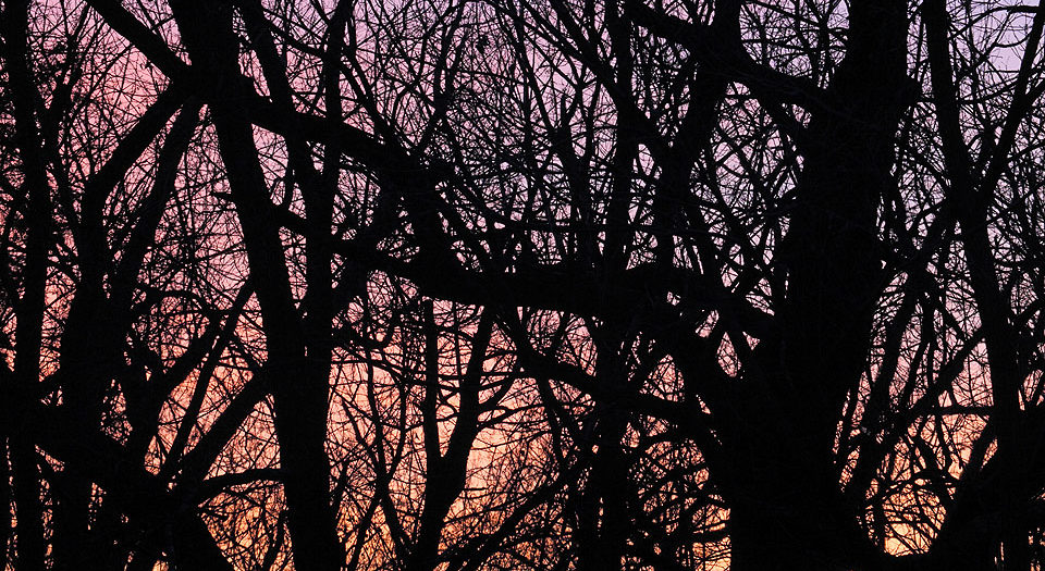 Day's End in the Wintertime Woods