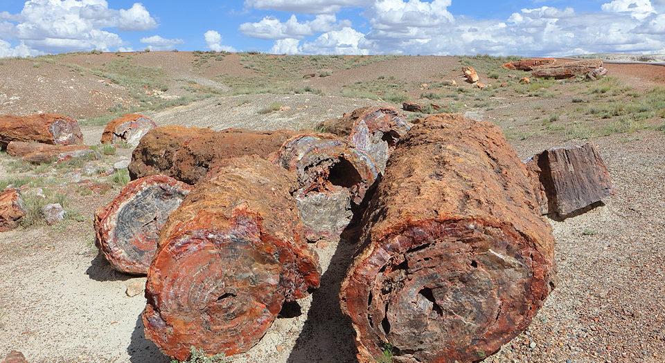 Petrified Forest Landscape